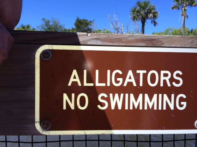 alligators no swimming