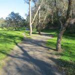 My morning walks in Eltham, Victoria, Australia