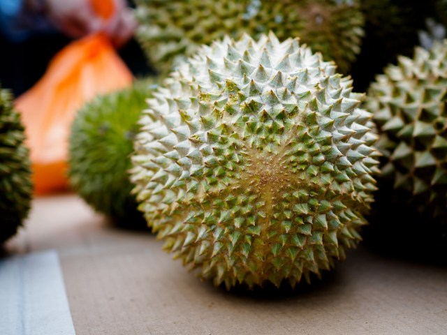 Jual Bibit Durian Musang King di Timika