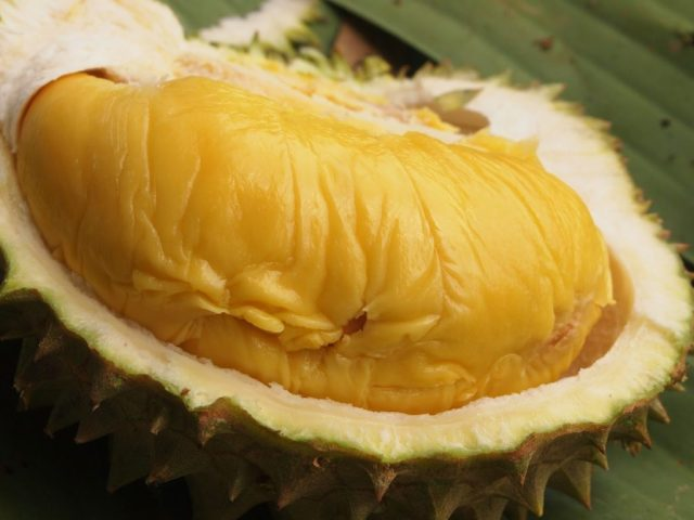 Jual Bibit Durian Musang King di Banjarmasin