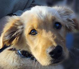 little dog guest