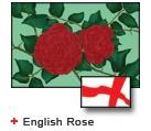 Bunting English Rose