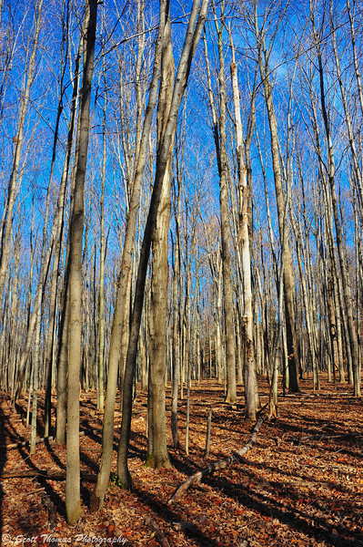 An atypical November day in a forest at Beaver Lake Nature Center near Baldwinsville, New York.
