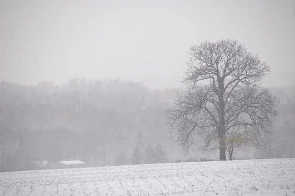 Tree in a field of gray snow.
