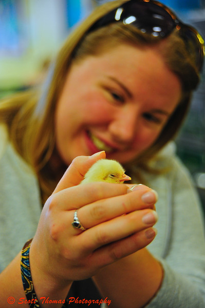My daughters annual photo of her holding a newly hatched chicken in the 4-H Youth building.