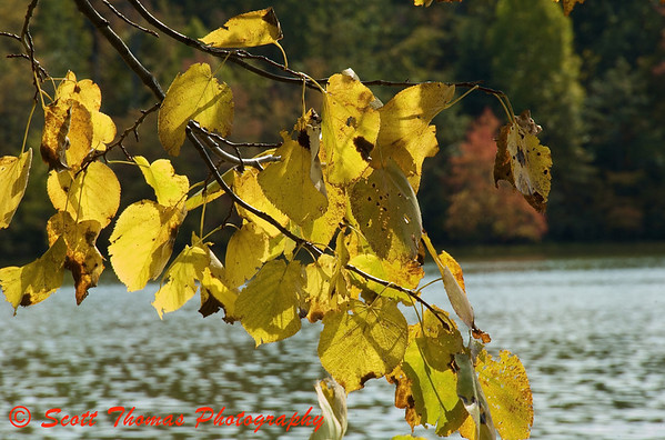 Golden color of Autumn