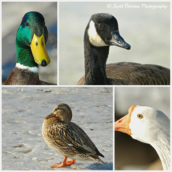 Portraits of some of the residents of Webster Pond.