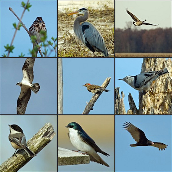 Click Here for the Birds of Montezuma Photo Essay