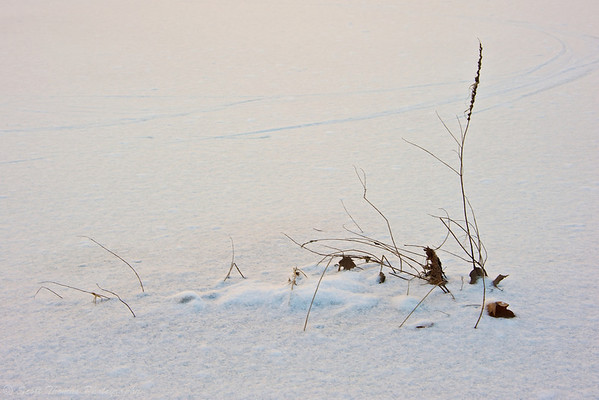 A minimalist attempt at a winter scene near Ithaca Falls in Falls Creek.