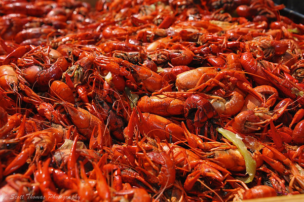 Steamed crawfish ready to be served during the Crawfish Festival at Clinton Square in Syracuse, New York on Saturday, May 4, 2013.