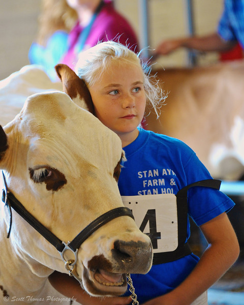 Young girl waiting to show her Dairy cow inside the Dairy Cattle Barn at the Great New York State Fair in Syracuse, New York.