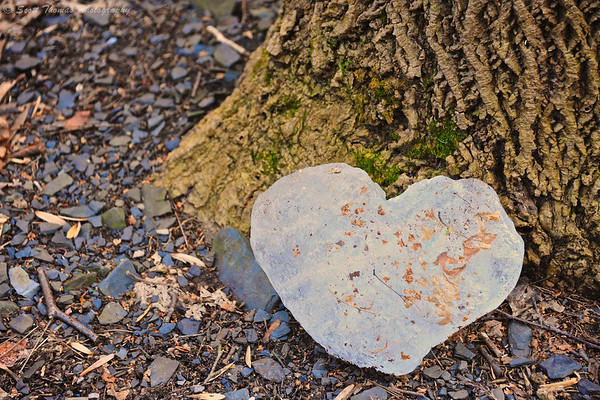 Heart shaped ice formation found at the base of a tree in the Taughannock Falls State Park near Ithaca, New York.