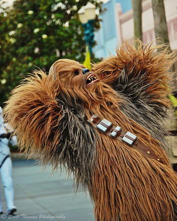 Chewbacca (Chewie) takes part in the Star Wars Celebrity Motorcade during Star Wars Weekend at Disney's Hollywood Studios back in 2012.