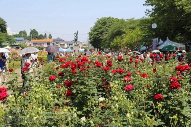 Yono rose festival