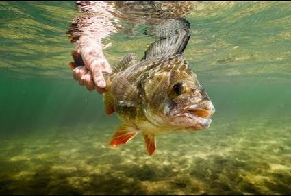 Balıkçılı