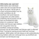 KattenWeetjes