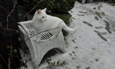 in de sneeuw.. nee ik blijf liever hoog en droog!