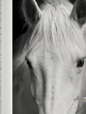 Adesivo de Porta Cavalo