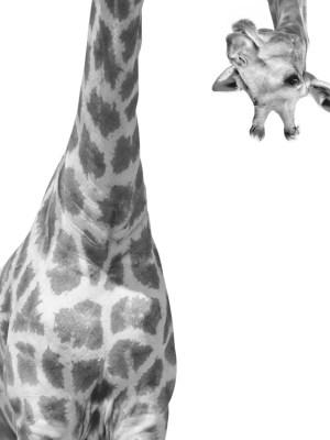 Painel Fotográfico Infantil Girafa