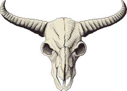 Buffalo Skull Bumper Sticker