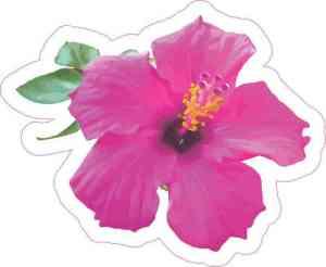 Pink Hibiscus Sticker