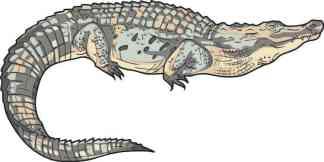 Die Cut Alligator Sticker