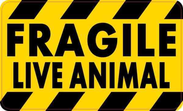 Fragile Live Animal Magnet
