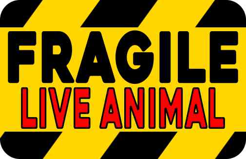 Red Fragile Live Animal Magnet