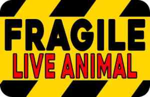 Red Fragile Live Animal Sticker