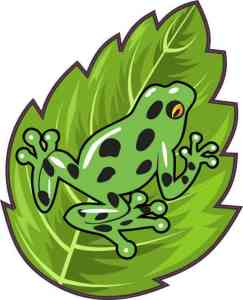 Green Poison Dart Frog Sticker