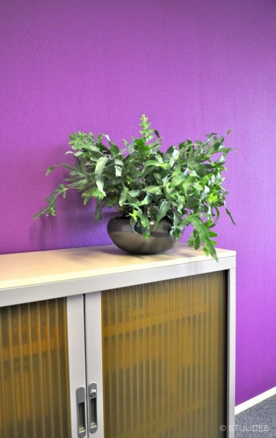 paars kantoor met groene plant: groen reduceert stress in Capelle na STIJLIDEE Kleuradvies, Interieuradvies en Styling