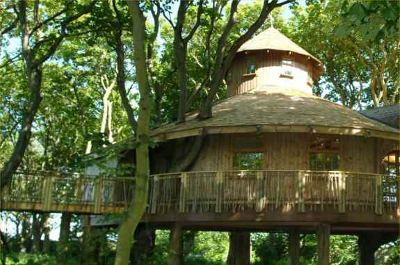 Treehouse.1