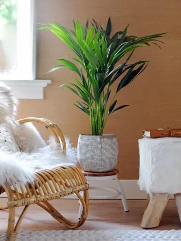 Interieur | Howea (Kentia Palm) = Woonplant van de maand januari #plant #woonplant