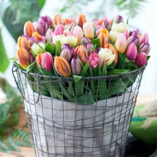 Tulpen - Lentebollen op pot. - Interieur | (Bloem)bollen voor binnen #lente #styling