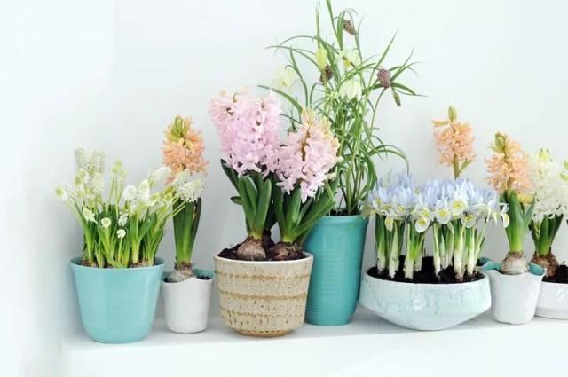 Lentebollen op pot. - Interieur | (Bloem)bollen voor binnen #lente #styling
