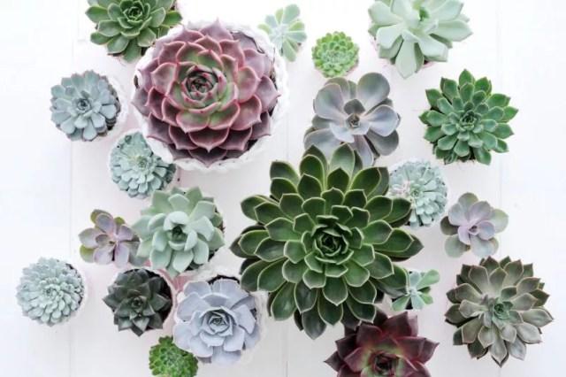 Interieur | Echeveria = Woonplant van de Maand augustus - www.stijlvolstyling.com