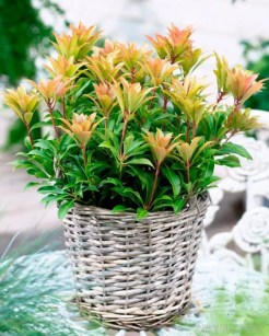 Herfst-2Btuin-2Ben-2Btuinplant-2Bvan-2Bde-2Bmaand-2Boktober-2B-2-