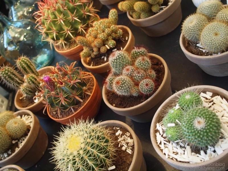 Interieur | Planten weer hip door woontrend 2015 - Botanisch wonen - Door: Woonblog www.stijlvolstyling.com