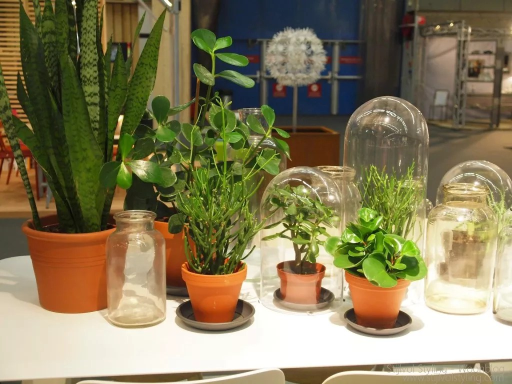 Interieur  Planten weer hip door woontrend 2015