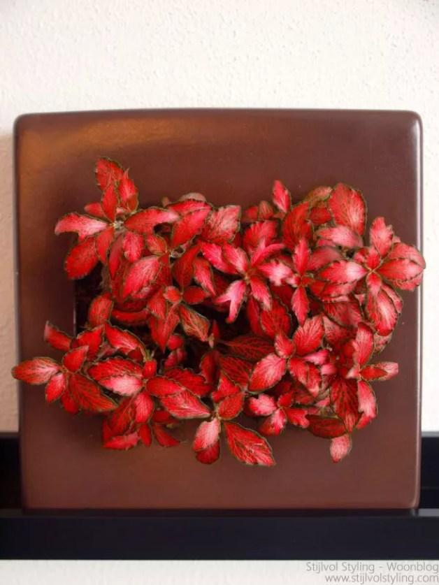 Groen wonen | #Flowerbox 'jouw plantjes als kunstwerk aan de muur' - review - #planten #bloemen #flowerbox #styling #groen #woonblog #interieurblog - www.stijlvolstyling.com