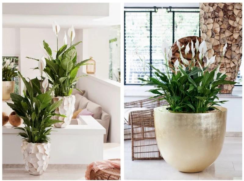 Groen wonen  Eco luxe  planten  bloemen trend 2015 nr2