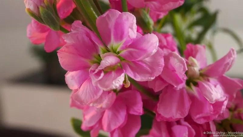 Groen wonen | BLOOMON kleurt jouw huis met bloemen - Stijlvol Styling woonblog www.stijlvolstyling.com