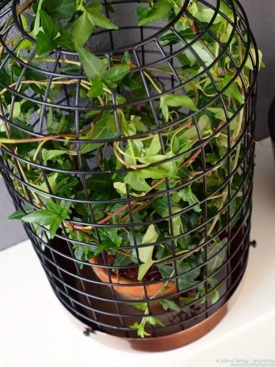 Hedera = woonplant van de maand - #woonblog www.stijlvolstyling.com