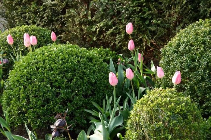 Buitenleven | Buxusbollen in de tuin - Tuinplant v/d maand april - #woonblog www.stijlvolstyling.com