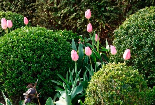 Buitenleven | Buxus = Tuinplant v/d maand april - #woonblog www.stijlvolstyling.com