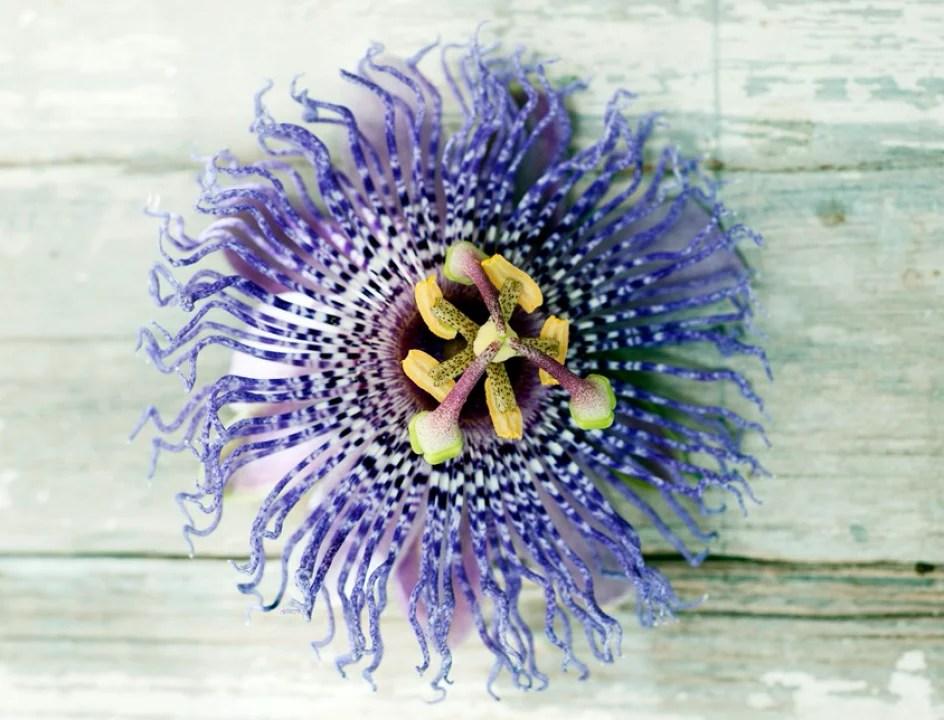 Buitenleven | Passiebloem = zinderende zomerplant van 2015 - Stijlvol Styling woonblog - www.stijlvolstyling.com