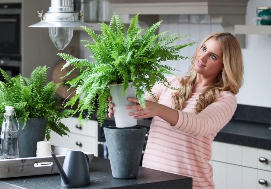 Groen wonen | Planten zonder zorgen met Aqua4weeks - Stijlvol Styling woonblog www.stijlvolstyling.com
