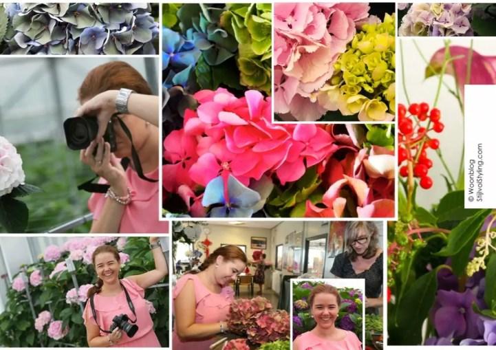 Groen wonen | Gek op Hortensia's - Stijlvol Styling woonblog (www.stijlvolstyling.com)