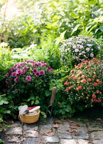 Bolchrysant in de herfst tuin | Buitenleven | 9x de mooiste herfst tuinplanten - Woonblog StijlvolvolStyling.com