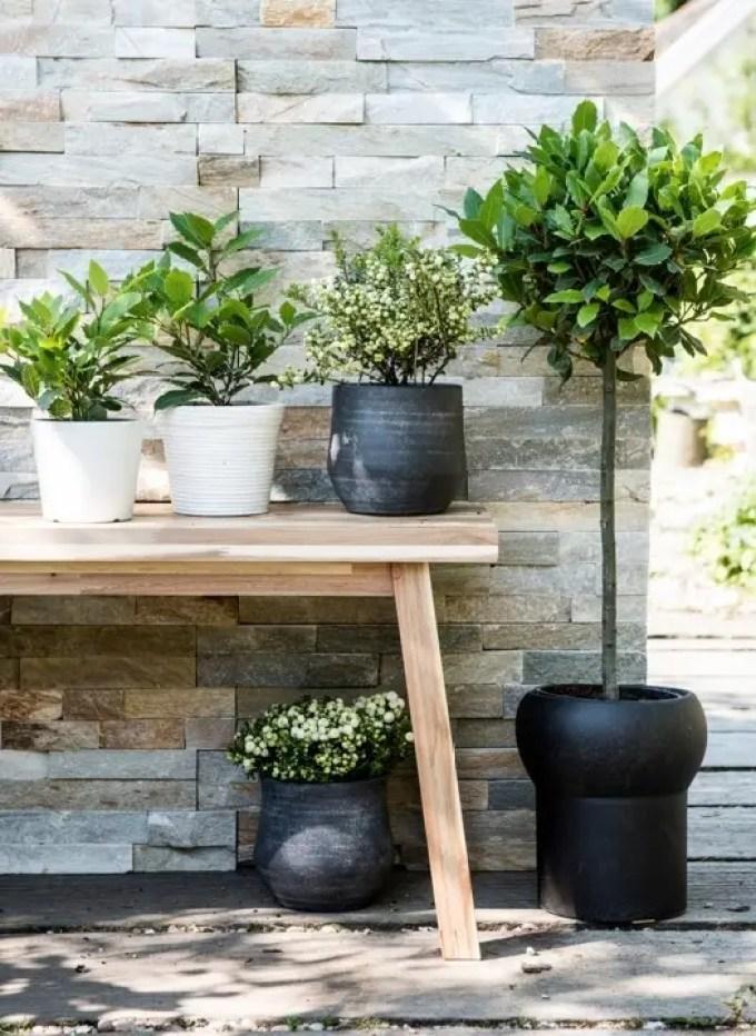 Buitenleven   Laurier = Tuinplant van de Maand oktober - Woonblog StijlvolStyling.com